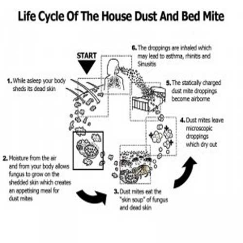 How To Prevent House Dust Mites?