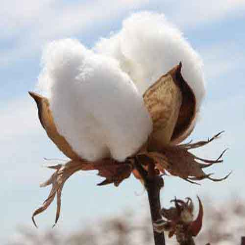 What Makes A Good Cotton Towel?